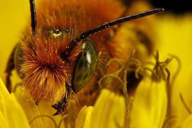 Мы их теряем: какой будет наша планета, если исчезнут насекомые