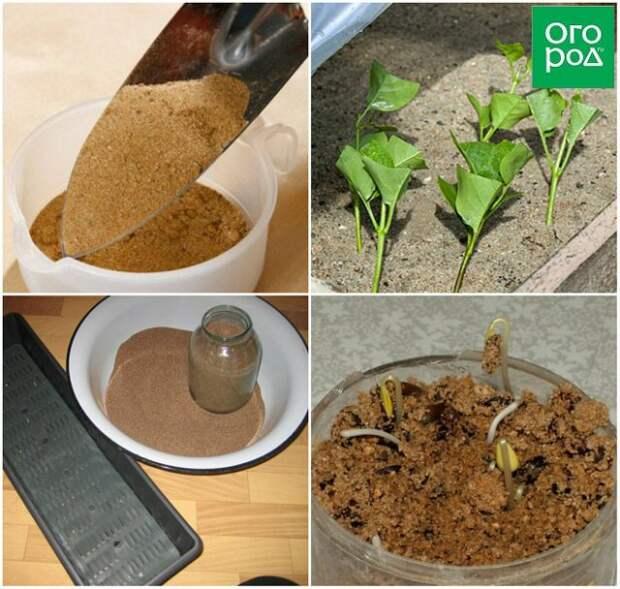 лучшая почва для рассады и семян
