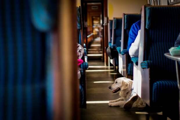 Проходящие через станцию Ростокино электрички больше других перевозят пассажиров с питомцами