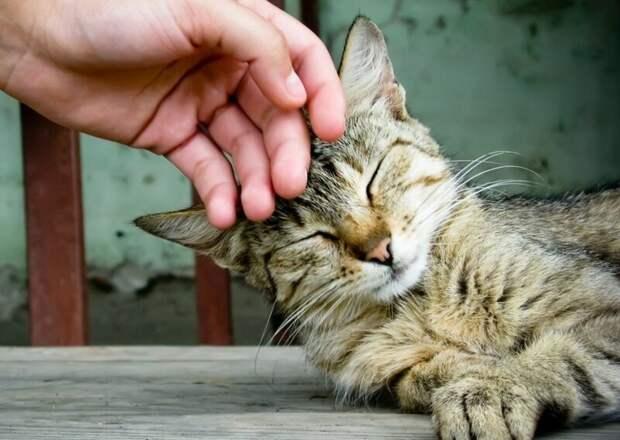 5. Любая кошка умеет мурлыкать. жены, интересное, кошки, юмор