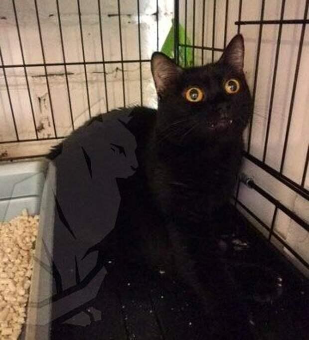 МЧСник спас кота и не смог его вернуть