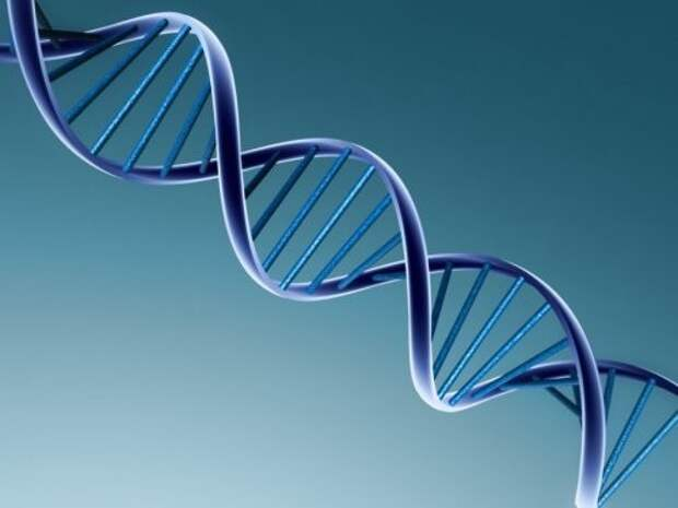 6. У нас общее ДНК с фруктами тело, человек, шокирующие факты