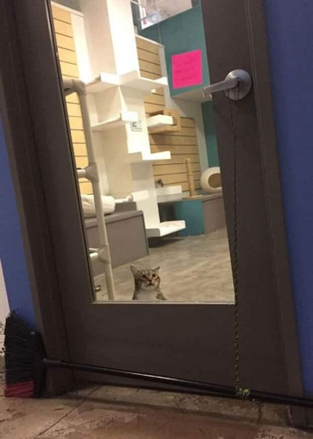 Кот попал в карцер за то что выпускает на волю других кошек - смотреть фото и видео