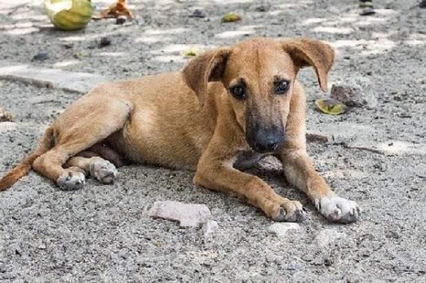 Тамбовчане жалуются на стаи агрессивных бездомных собак