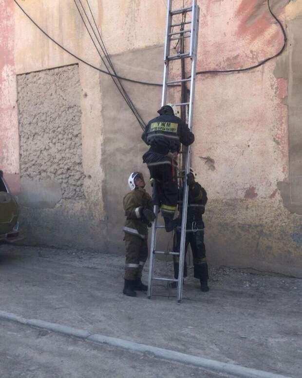 Пожарные спасли котёнка в Жезказгане