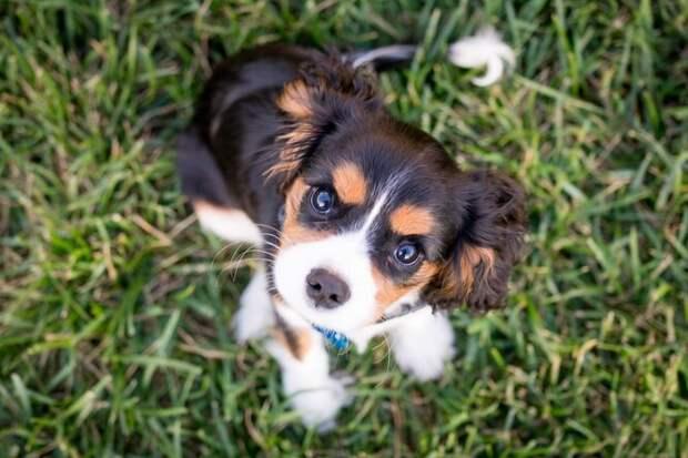 Был похож наживой кактус: крошечного щенка спасли инашли ему новый дом