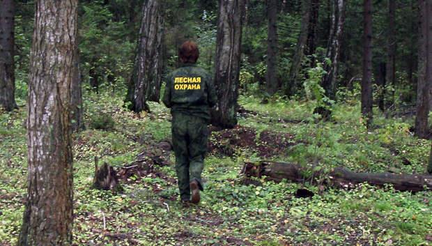 Инспекторы выявили 101 нарушение в лесах Подмосковья