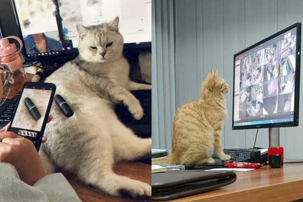 10+ милых котиков, которые во всю трудятся, несмотря на то что у них лапки