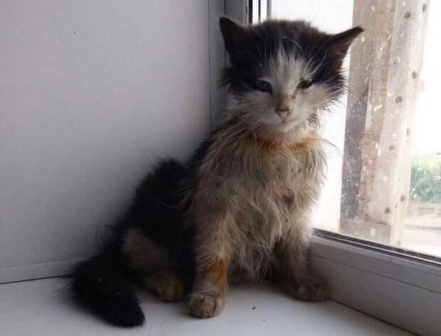История бездомного котенка, который превратился в красавца кота