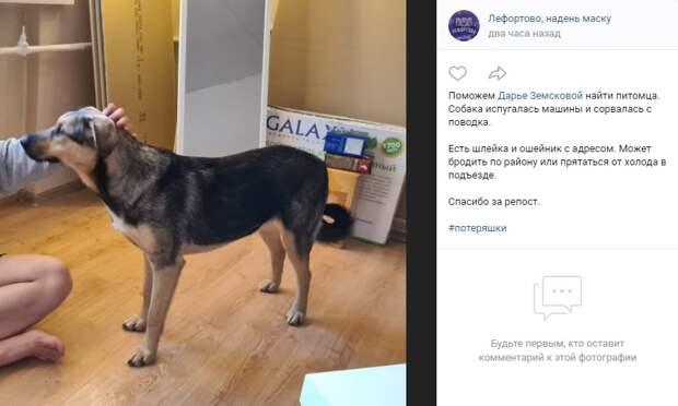Фото дня: жительница Лефортова ищет собаку-потеряшку