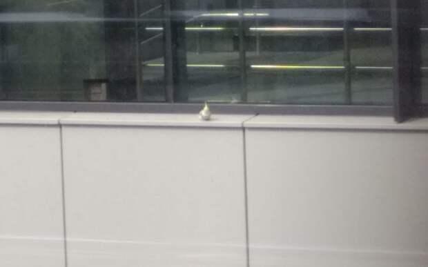 В вестибюле станции «Щукинская» поселился говорящий попугай