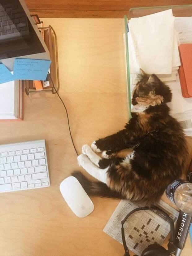 Правдивая история о котенке-крохе, который в одиночку оптимизировал работу всего офиса