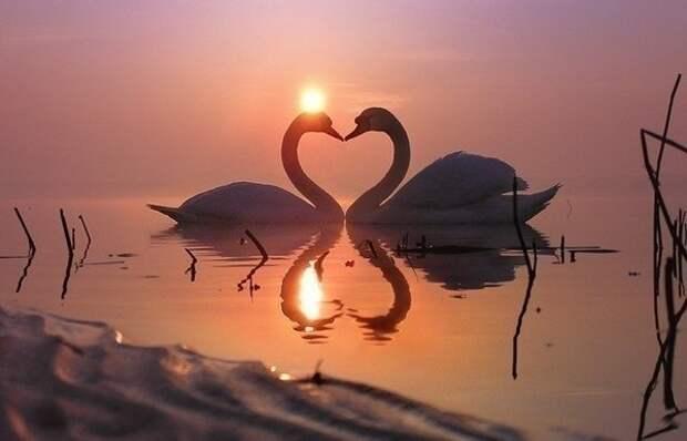 Животная верность и любовь