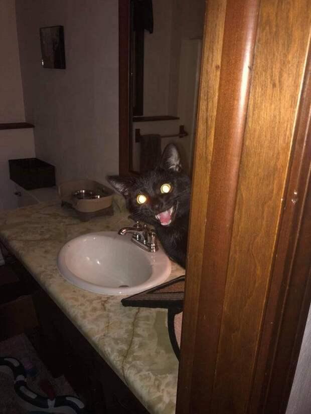 13 черных котов, которые развеят все суеверия вокруг них