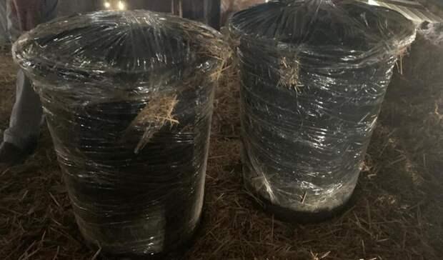Под Волгоградом задержан крупный наркоторговец сдвумя бочками конопли