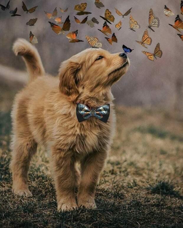 Больше бабочек! бабочка, баттл, милота, пес, подборка, собака, фотошоп