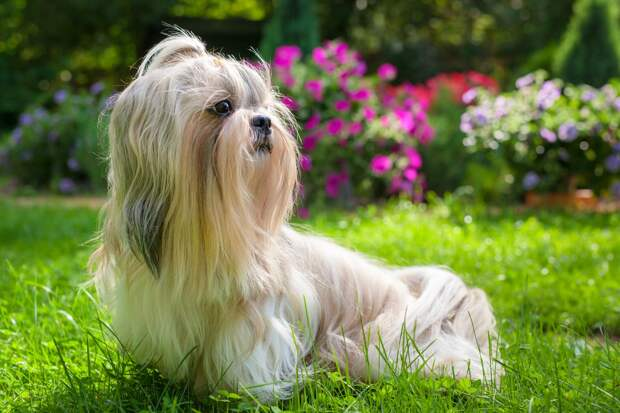 Собаканадачепроживака: как сделать поездку за город безопасной для питомца