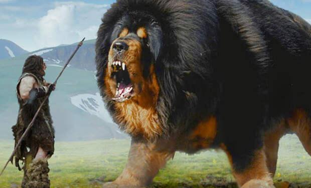 Пес-медведь: какими были собаки 10000 назад
