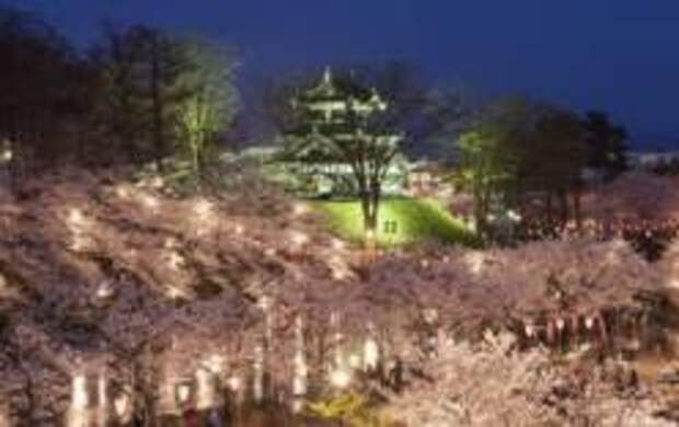 Фестиваль цветущей вишни в парке Такада