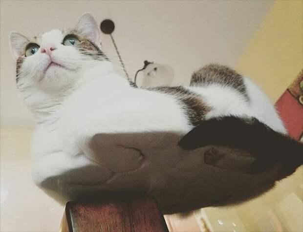 Всегда на месте котики, коты, милота, мотики, сквозь стекло