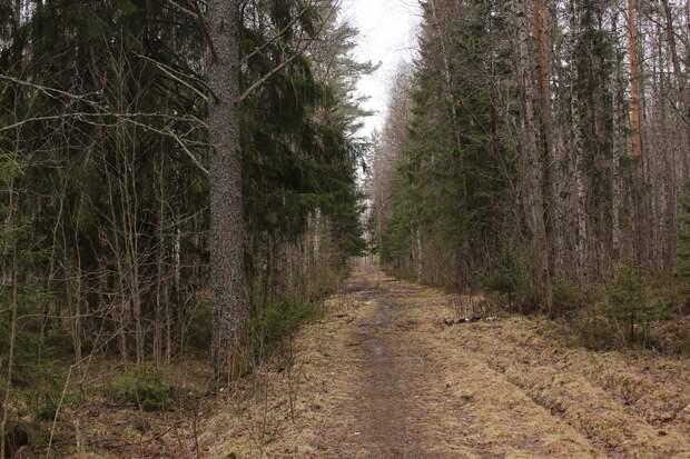 Подростка, который в январе ушел из дома, нашли мертвым в лесу за торговым центром