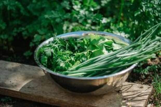 Острые соусы и соленые заправки. Как заготовить зелень на зиму
