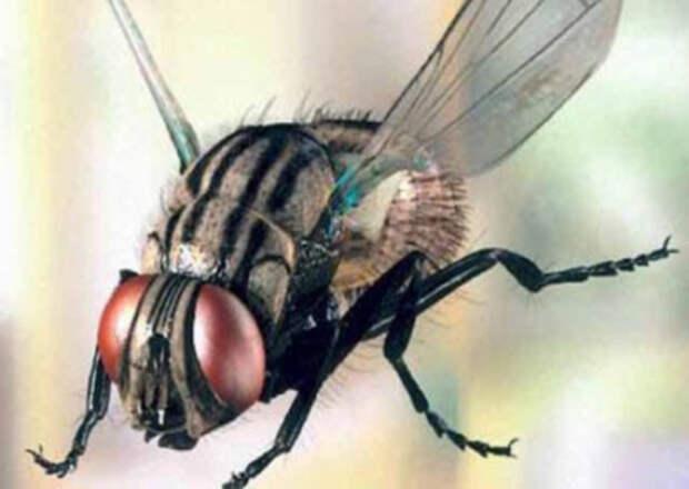 Кандидат на премию Дарвина: Француз, пытаясь убить муху, взорвал собственный дом