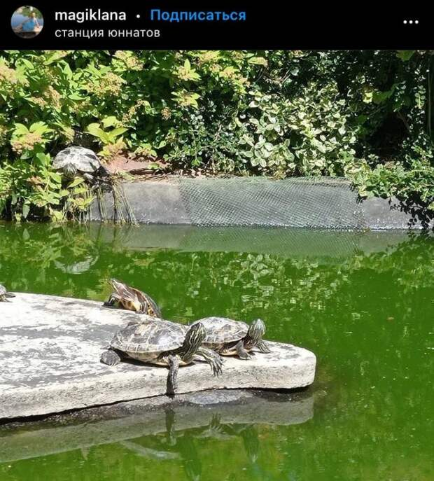 Фото дня: солнечные ванны черепах на станции юннатов