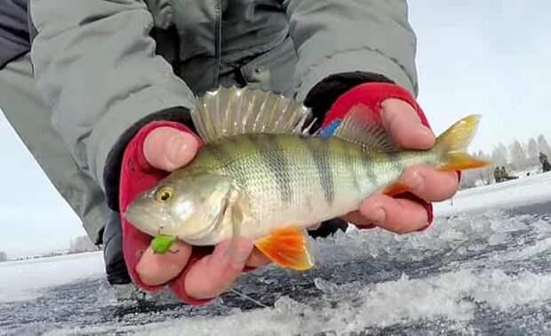 Уловистая зимняя приманка, которую на Урале прозвали «Дуралов» показывает отличные результаты на рыбалке