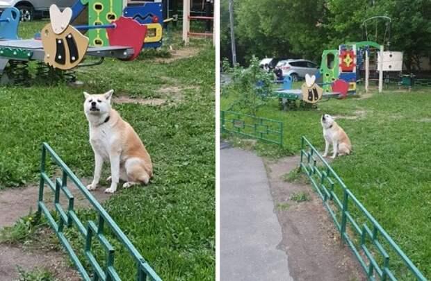 На улице Клары Цеткин сидит на месте грустный и потерянный «Хатико»