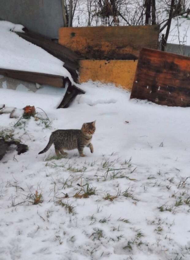 Умоляем, помогите!!! Скоро дачи окончательно опустеют, и котята просто погибнут от холода и голода!