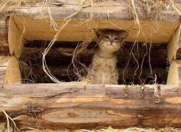 Котенок в срубе
