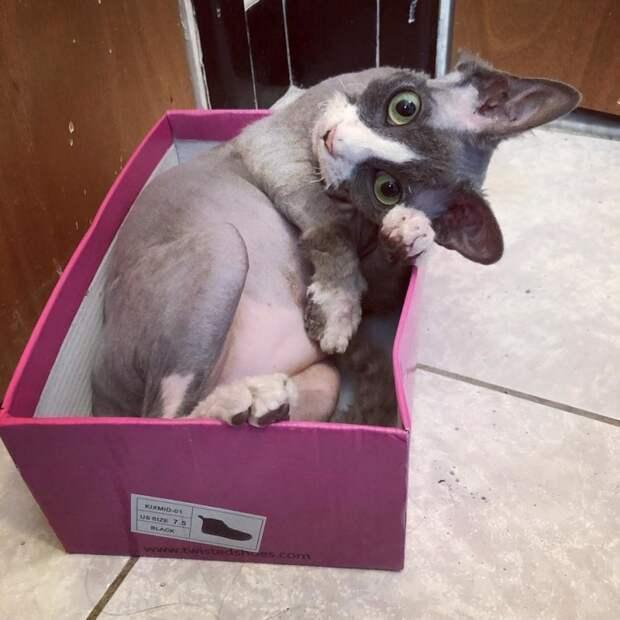 Девушка выходила котенка, который выглядел как плюшевая игрушка