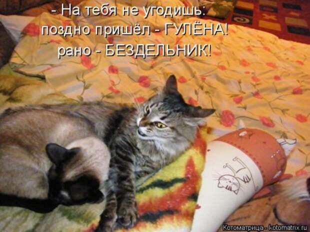 1451492449_kotomatritsa_6c
