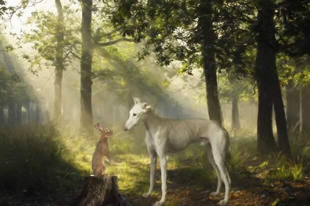 12. Порода, борзая, гальго, животные, испания, собака, спасение, фотография