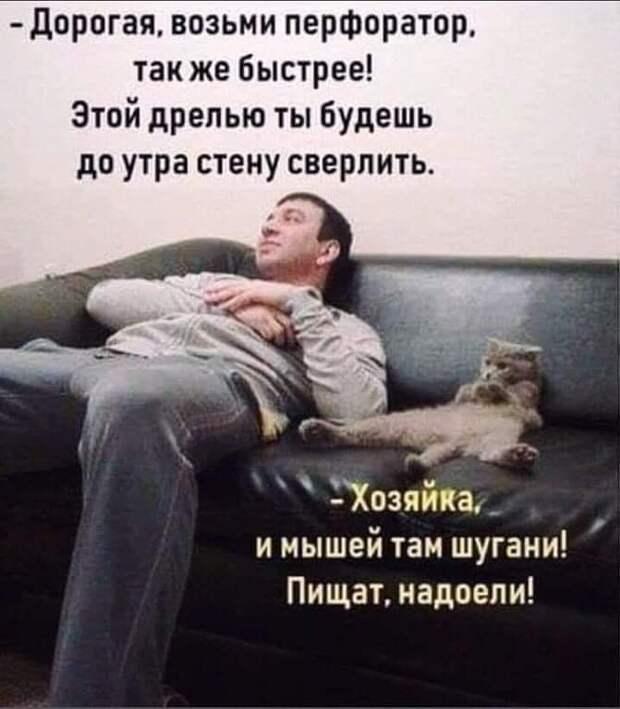 Инженер, бухгалтер, химик и государственный служащий поспорили, чей кот умнее...