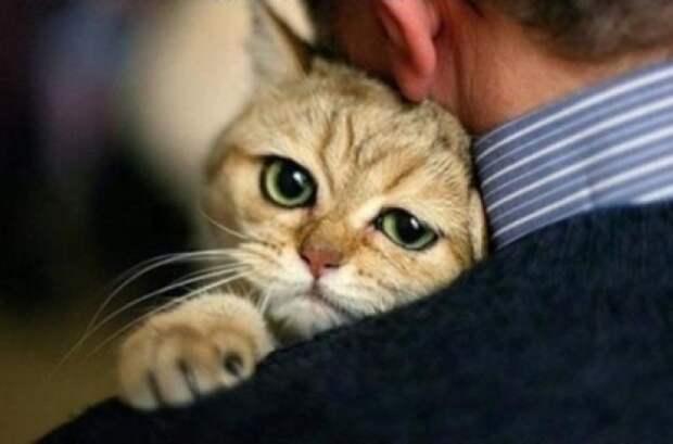 Отдам кота-мерзавца в плохие руки!