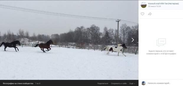 Фото дня: три коня в Бурцеве