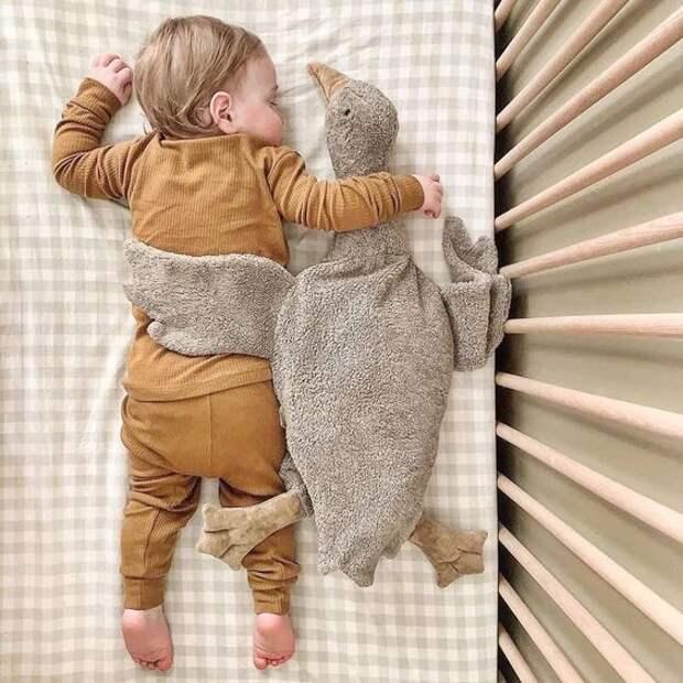 Под крылом так сладко спится