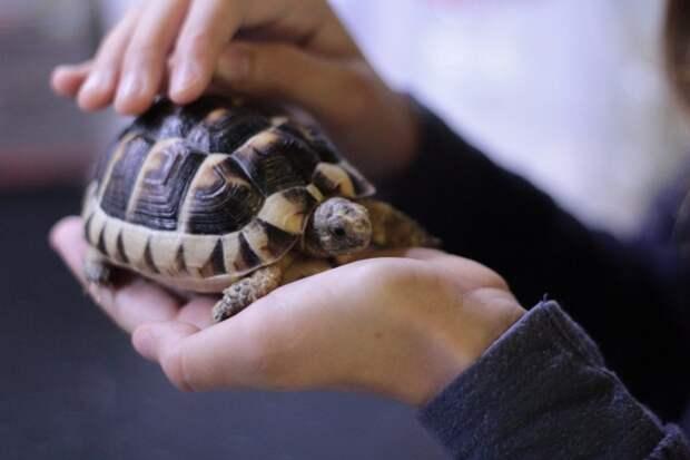 Посетителям парка «Покровское-Стрешнево»: специалисты Мосприроды призвали не выпускать домашних черепах на волю