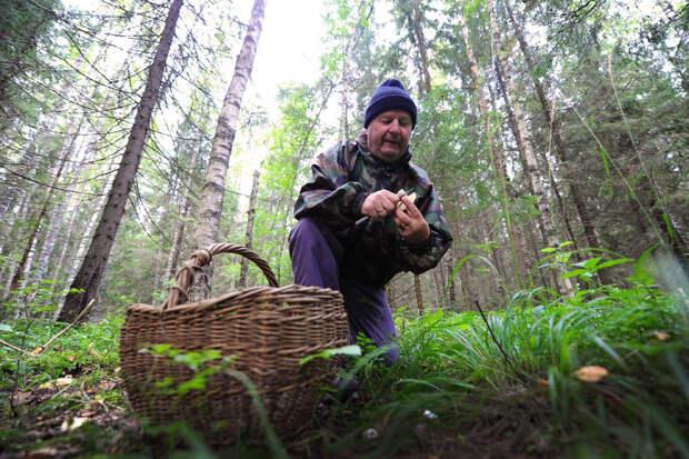 На чем можно заработать, гуляя по лесу с корзинкой