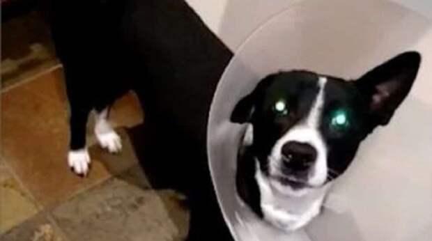 Увидев привязанного щенка, туристы решили спасти его. И тут возникла проблема стоимостью в £ 8500