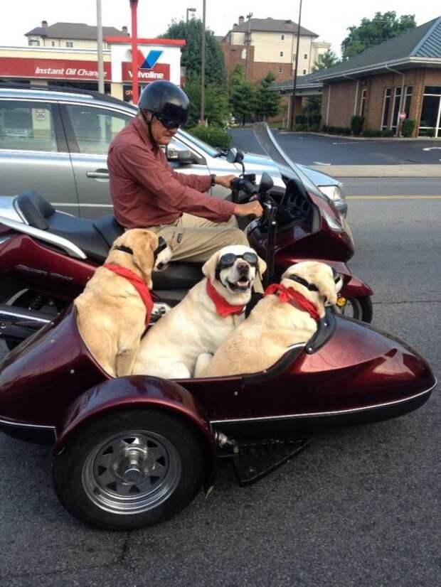 25 собак, которые сделают ваш день счастливее