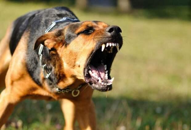 Выяснилось, с чем связано агрессивное поведение собак