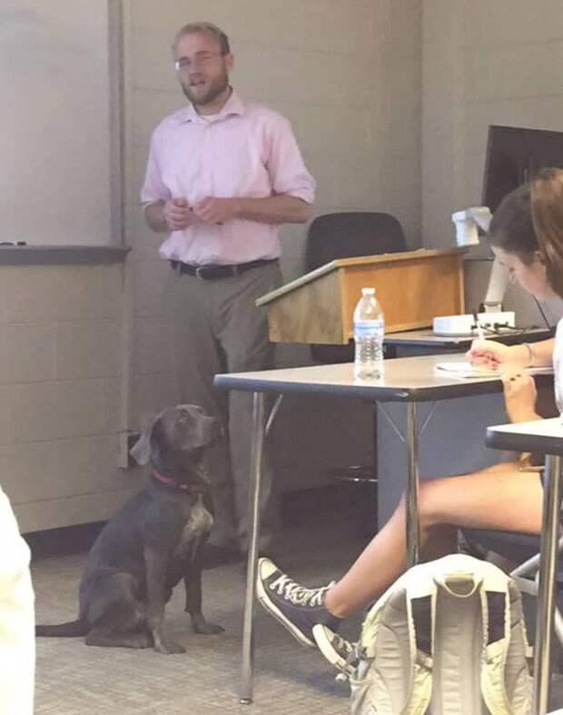 Надвигалась беда… Спасая любимую собаку, девушка отправила необычное письмо своему преподавателю!