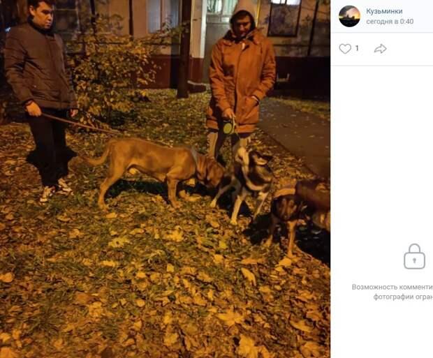Жители Кузьминок вернули потерявшегося бордоского дога хозяевам