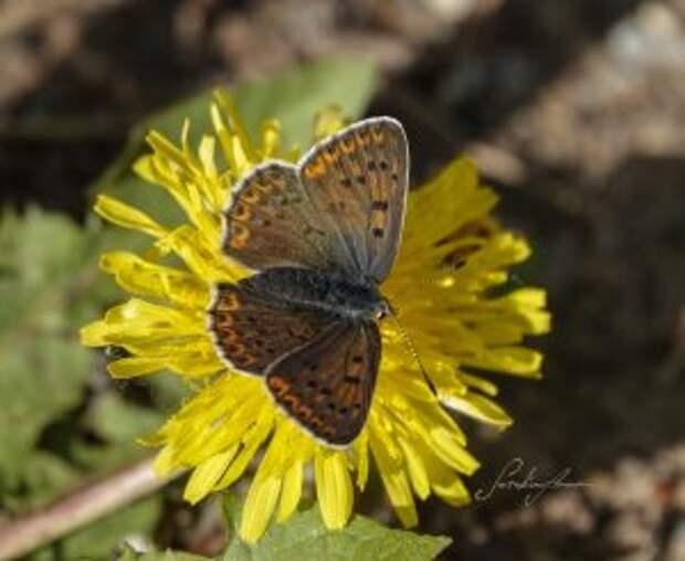 Эколог из Северного Тушина раскрыла секрет удачного снимка любителям бабочек