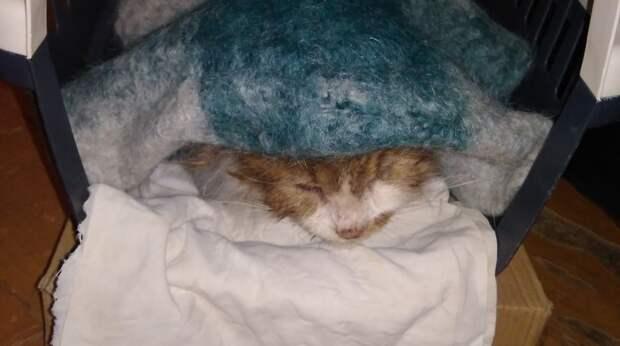 31 декабря на рынке появилась истощённая кошка. И только один парень, отложив все дела, решил её спасти