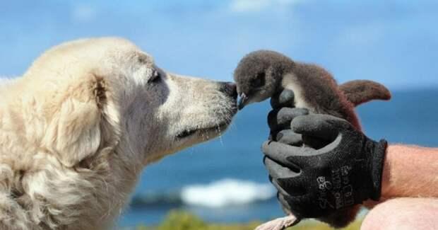 Для дружбы нет преград: коты и собаки, которые дружат с другими животными