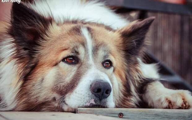 Верный пес до слез растрогал своего хозяина